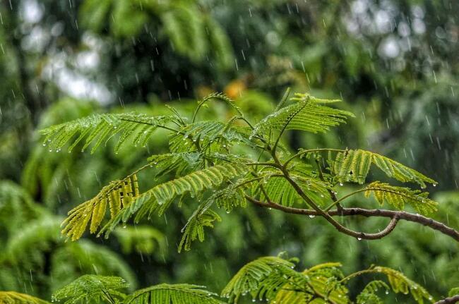 《谷雨》又是一年别春时!